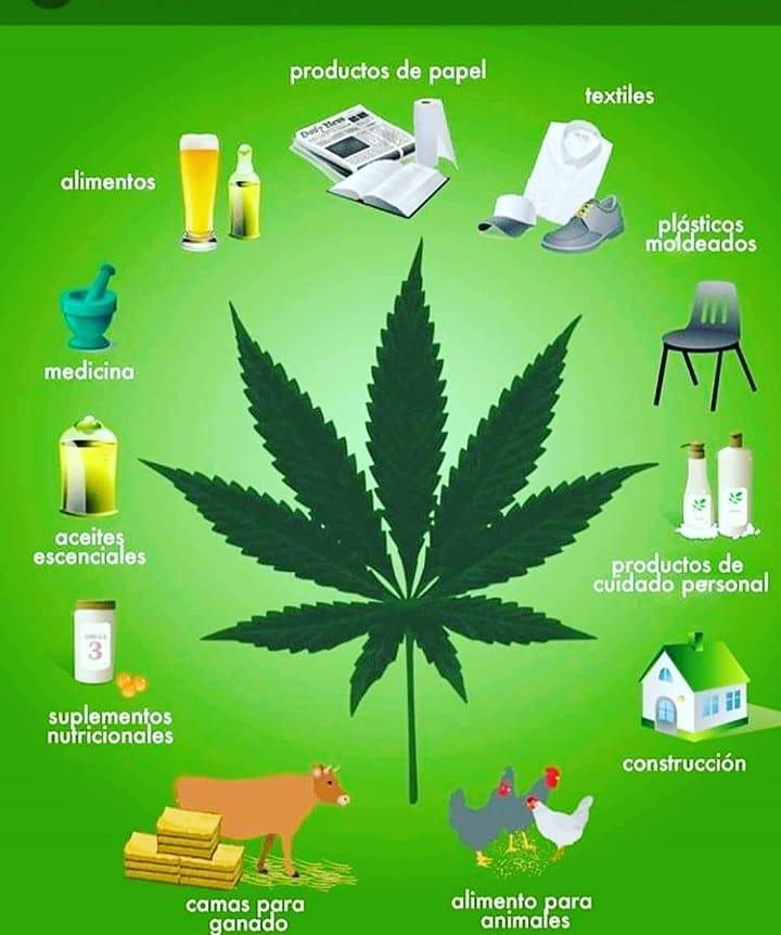 La marihuana enfocada al uso terapéutico